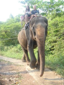 At the elephant farm