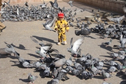 Boy playing with pigeons at Amber Fort